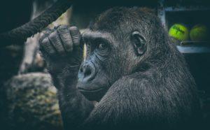 """Ученые впервые очистили тело обезьян от """"спящего"""" ВИЧ"""